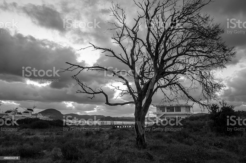 El arbol seco stock photo
