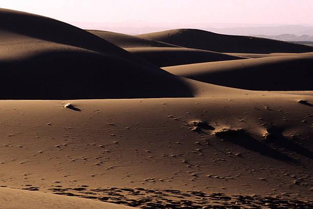 The dunes of the desert stock photo