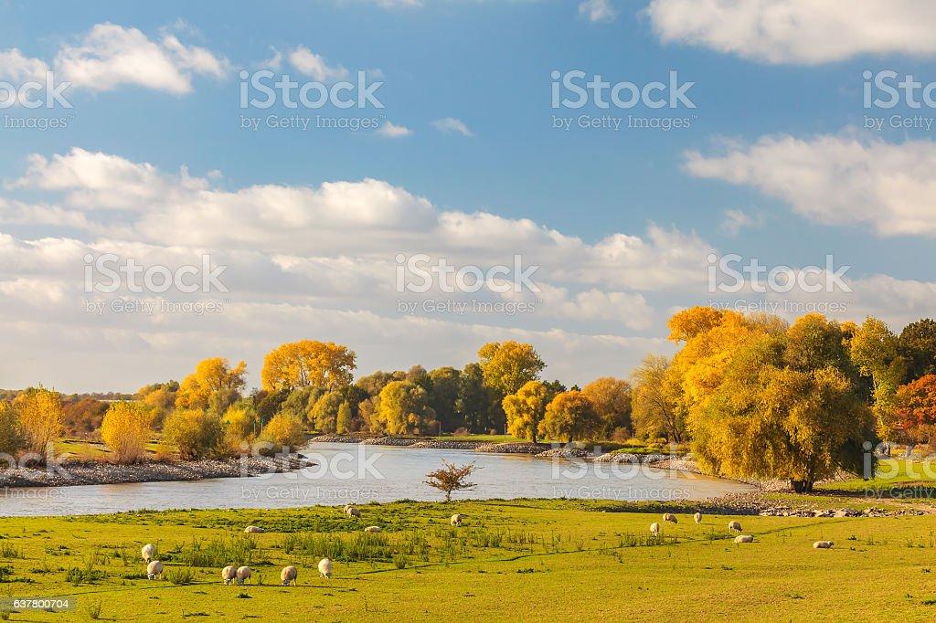 The Dutch river IJssel between Arnhem and Zutphen foto
