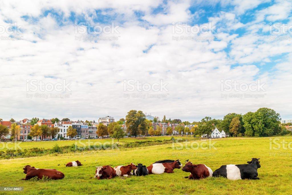 The Dutch Sonsbeek city park in Arnhem foto