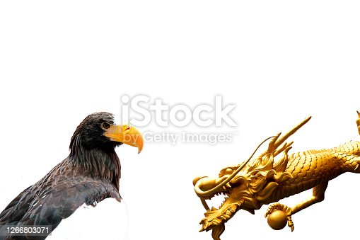 The eagle and the golden dragon  isolated on white background, Concept of role in the world Of America and China
