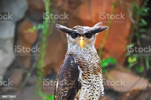 The eagle owl picture id868775842?b=1&k=6&m=868775842&s=612x612&h=jx 9zxbkqjgpsozz1jx5fe0d5xgwrds9tstnxtnepgg=