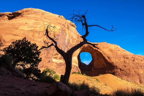 The Ear of the Wind Arch with a dead juniper tree in the foreground, Monument Valley Navajo Tribal Park, Arizona, USA. The Ear of the Wind Arch with a dead juniper tree in the foreground, Monument Valley Navajo Tribal Park, Arizona, USA. navajo sandstone formations stock pictures, royalty-free photos & images