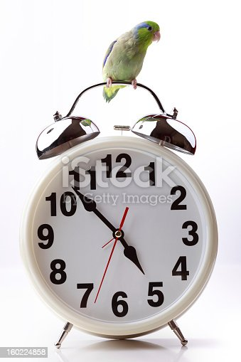 Small, green parrot perched on the top of a very large alarm clock. This is a concept for the sayings