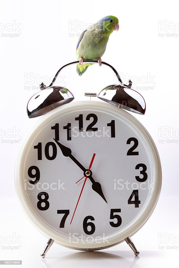 The Early Bird or Time Flies stock photo