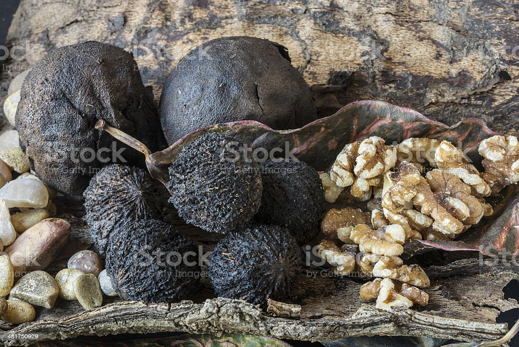 the eastern black walnut stock photo