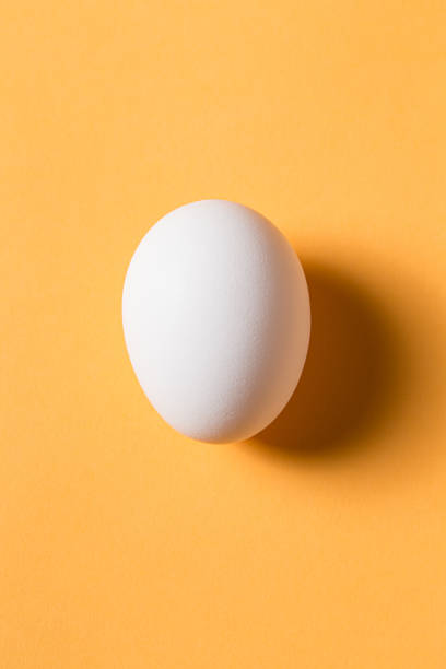 the egg is on the yellow background. - uovo foto e immagini stock
