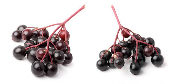 The Elder berries. stock photo