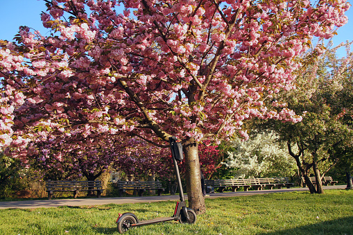 The electric scooter and the Magnolia tree during spring in New York City