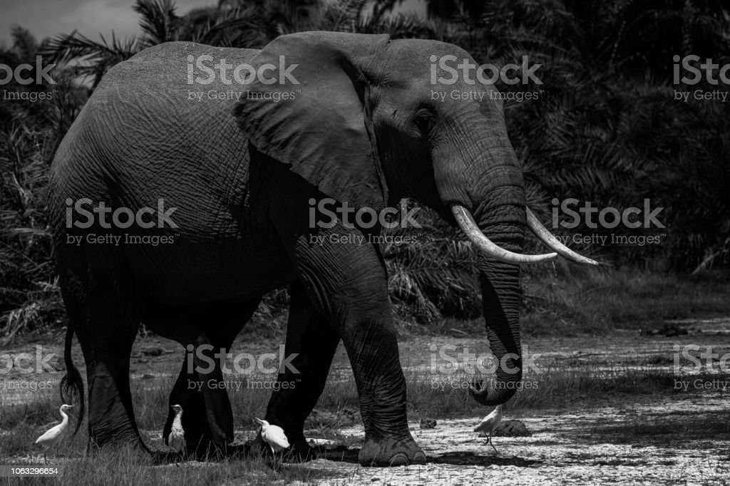 The Elephant Family!! stock photo