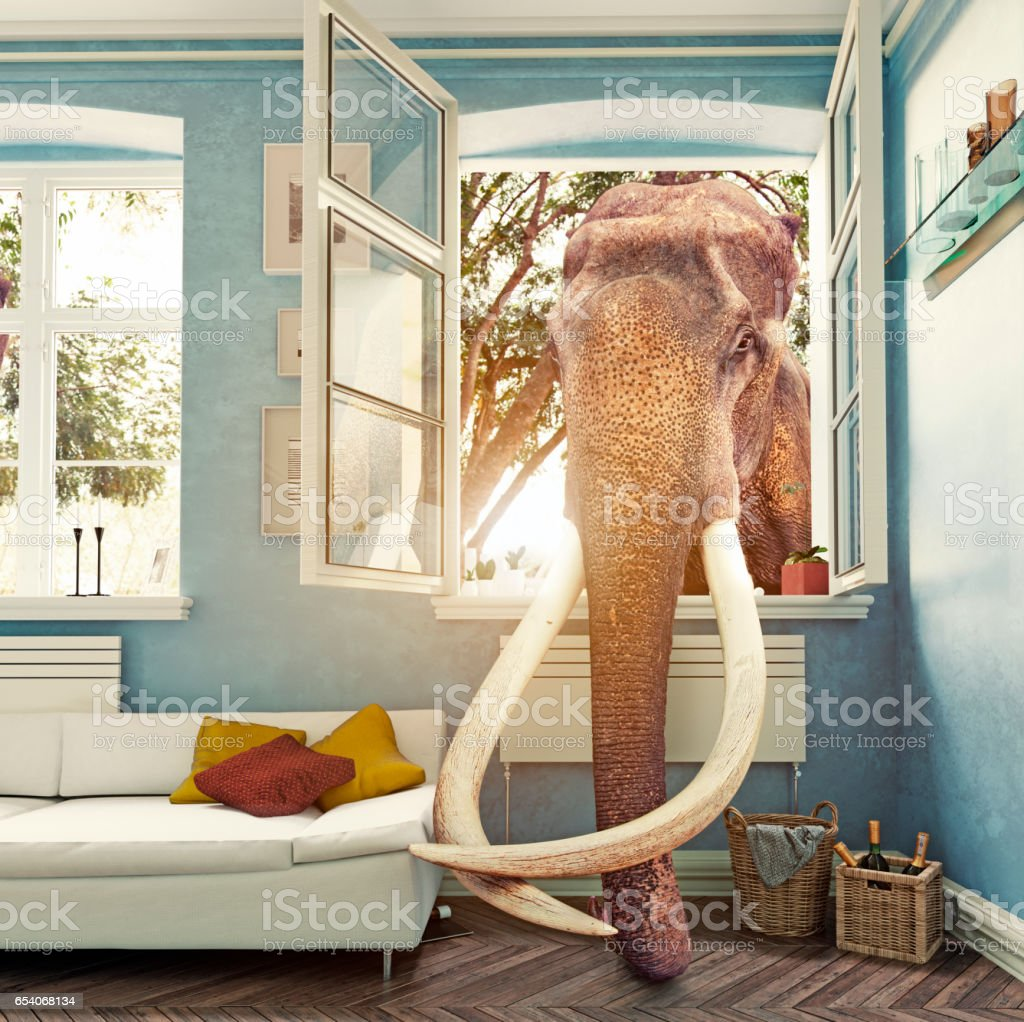The elephant in the room stock photo