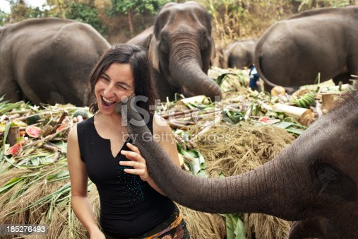 European woman tourist enjoys being kissed by a young elephant on National Elephant Day in Thailand where they are treated to a huge feast.