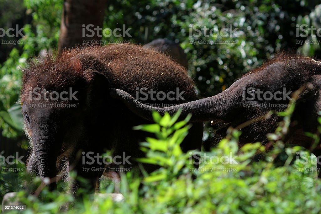 The Elephants photo libre de droits