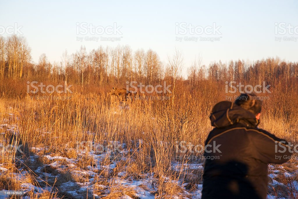The elk hunting royalty-free stock photo
