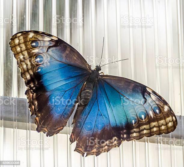 The emperor butterfly eurasian butterfly picture id639633098?b=1&k=6&m=639633098&s=612x612&h=7nbx1qw74qy5mo0eezq 7zsolds4v8wdefzmnldokro=
