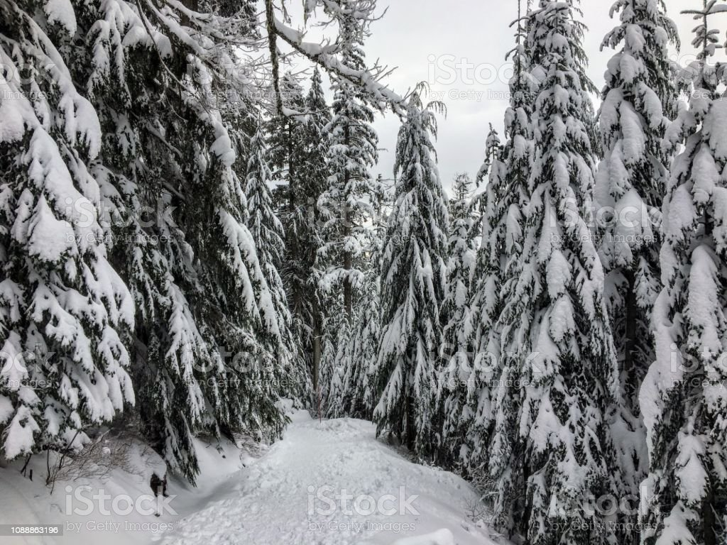 The empty snowy path of the Bowen Island Lookout trail stock photo