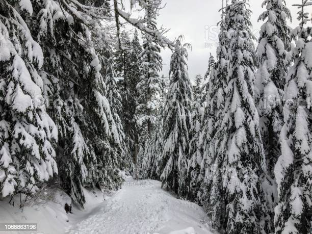 Photo of The empty snowy path of the Bowen Island Lookout trail