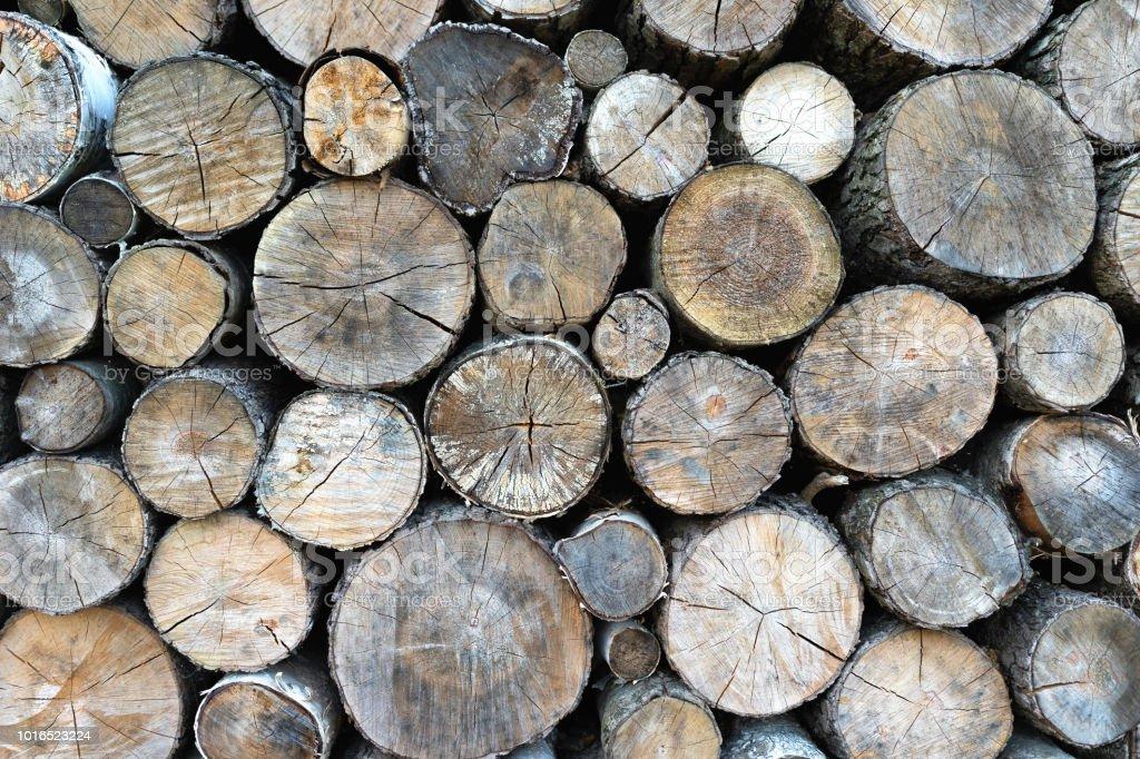 Les extrémités des arbres abattus - Photo