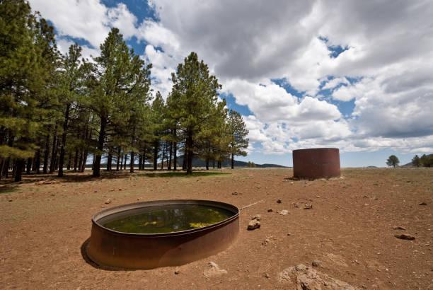 Wildlife Water Tank stock photo