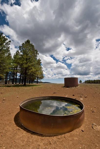 wildlife water tank - jeff goulden stock photos and pictures