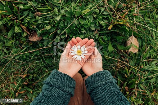 Direct above view of an unrecognisable woman holding a daisy in the palms of her hands.