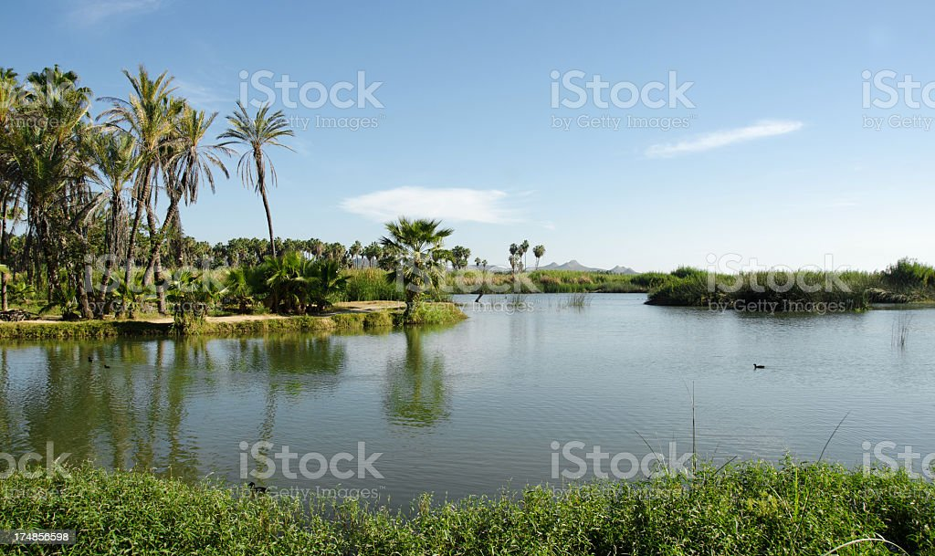 The Estuary  in San Jose del Cabo royalty-free stock photo