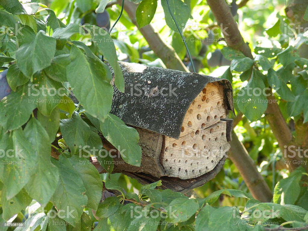 The even handmade insect house stock photo