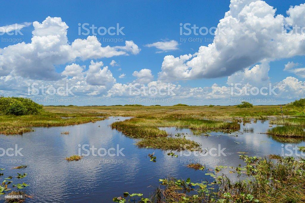 The Everglades stock photo