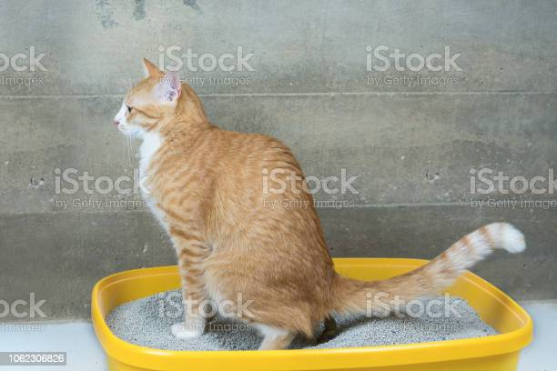 The excretion of cats is routine daily picture id1062306826?b=1&k=6&m=1062306826&s=612x612&h=9a8dngdzki2kg0iizdv6ngkibppwrzh uesbowl7y10=