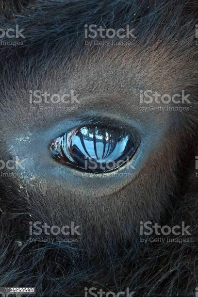 The eye of the beast is piercing picture id1135956538?b=1&k=6&m=1135956538&s=612x612&h=ceh6niysrcdywrc7nvb2agvau pwelwmnbuxnwhcmv0=