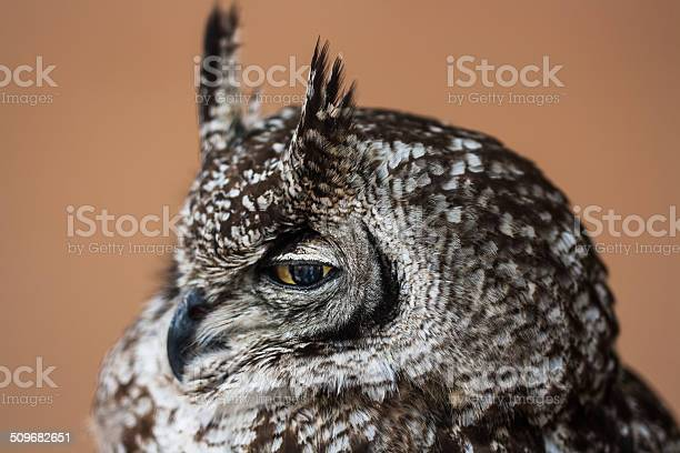 The eye of the owl picture id509682651?b=1&k=6&m=509682651&s=612x612&h= y4 vubu17cx jp8i6tg7flurgkm5eae745txomvodg=