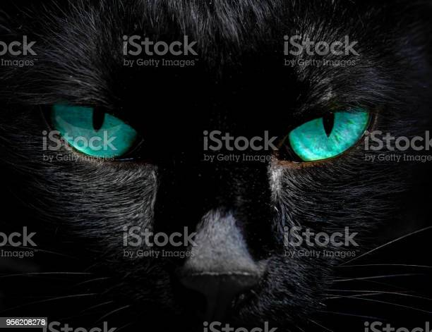 The eyes of a black cat are looking at you in darkness picture id956208278?b=1&k=6&m=956208278&s=612x612&h=zyra9hxxutm udq bzhtylq4dkrvdttzg 14vqndgf4=