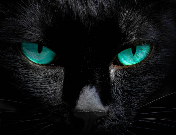 The eyes of a black cat are looking at you in darkness picture id956208278?b=1&k=6&m=956208278&s=612x612&w=0&h=xa8escs52xdw b8kgpkz038xp eye2q84z9g grjq7m=