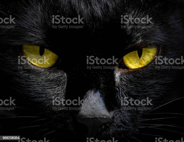 The eyes of a black cat are looking at you in darkness picture id956208354?b=1&k=6&m=956208354&s=612x612&h=k9rtan6plbaxuelzo rf6xn6p378g8rrd6d26vpnipg=