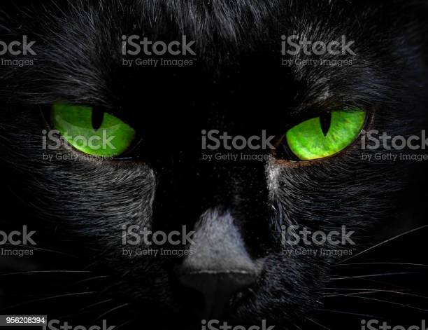 The eyes of a black cat are looking at you in darkness picture id956208394?b=1&k=6&m=956208394&s=612x612&h=rck1gdfddlzal7hwhuj9arnl06utqmodzt9w 8mgy2i=