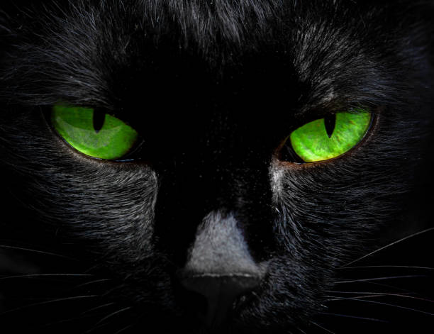 The eyes of a black cat are looking at you in darkness picture id956208394?b=1&k=6&m=956208394&s=612x612&w=0&h=93rxwfb14szo h27ckqnh9krvkpefib0mqj0xd2kgzc=