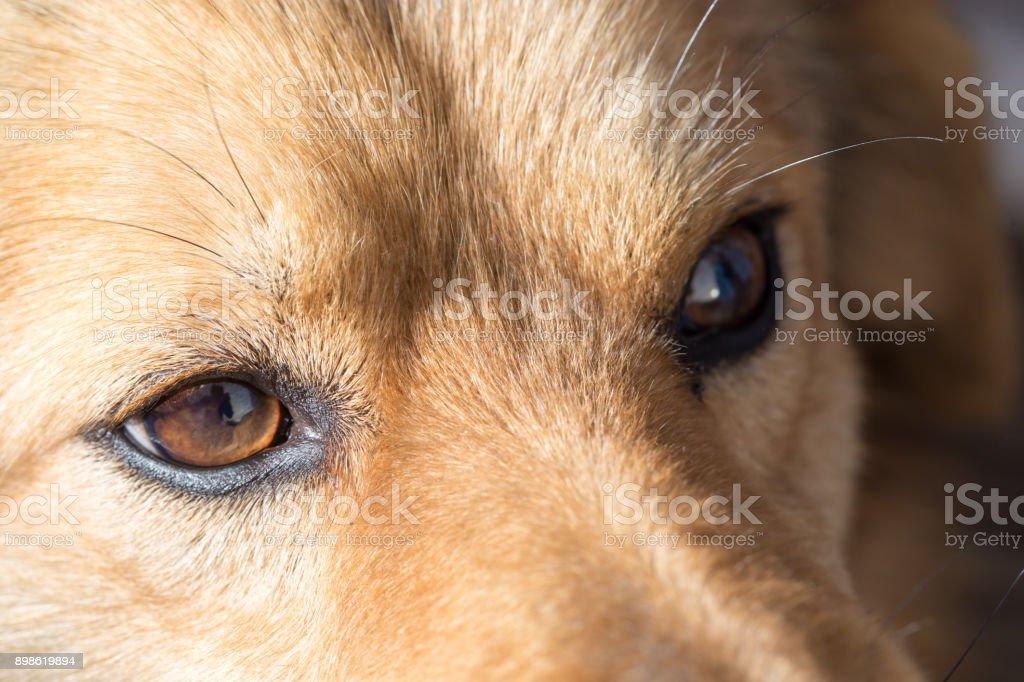 the eyes of a dog. macro stock photo