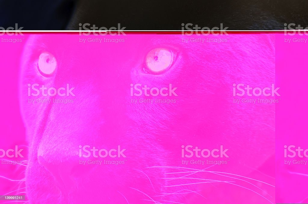 The eyes of a predator stock photo