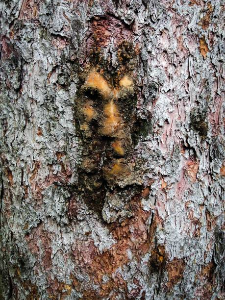 The Face in the Tree stock photo