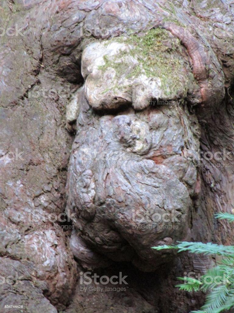 The face of a tree goblin stock photo