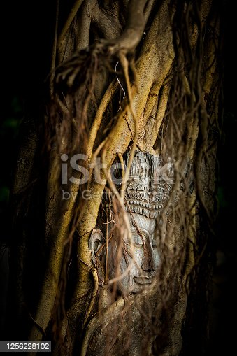 Head of Buddha in the tree root