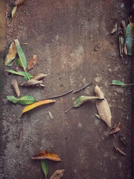 As Folhas Caídas - foto de acervo