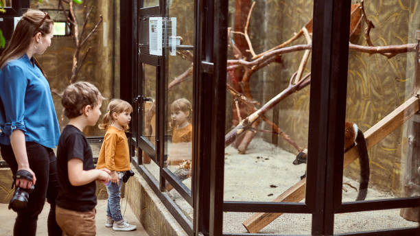 the family at the zoo look at the animals through a safety glass the family at the zoo look at the animals through a safety glass zoo stock pictures, royalty-free photos & images