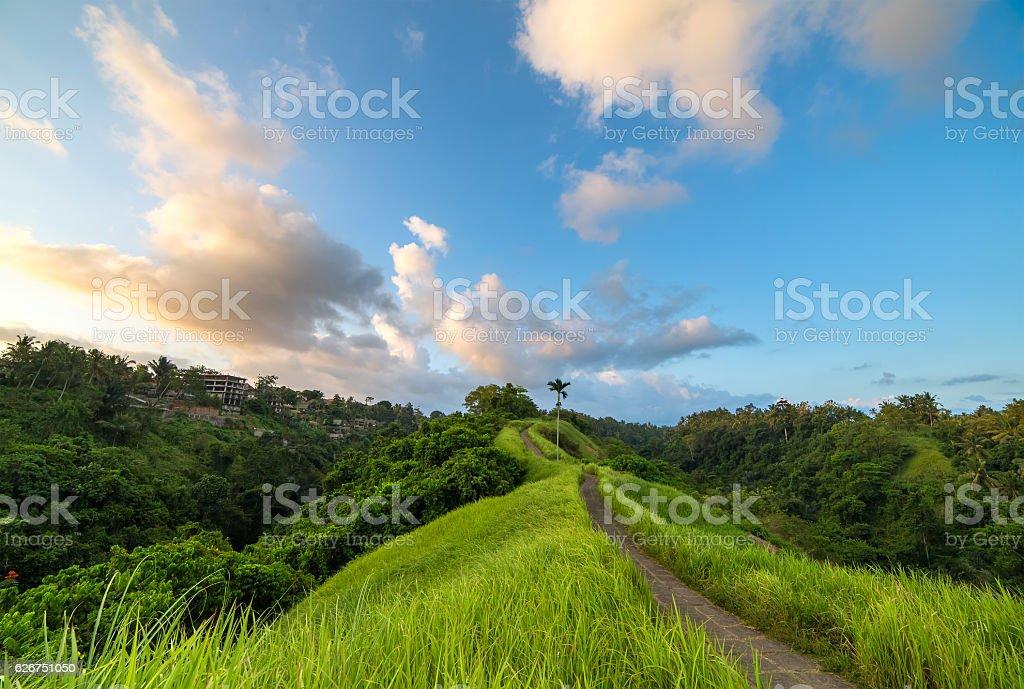 The famous Campuhan Ridge Walk in Ubud, Bali, Indonesia stock photo