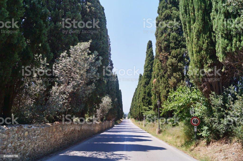 The famous cypress avenue, Bolgheri - foto stock