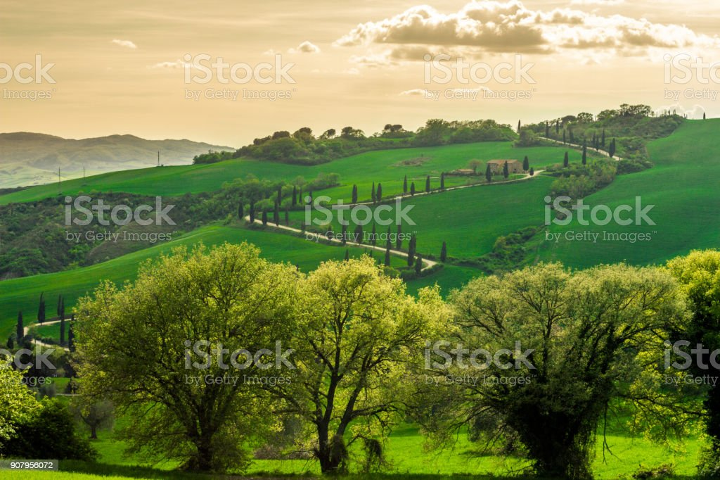 The Famous Winding Road With Cypresses In Val D' Orcia stock photo