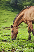 Cropped shot of a horse eating grass on a farm outside