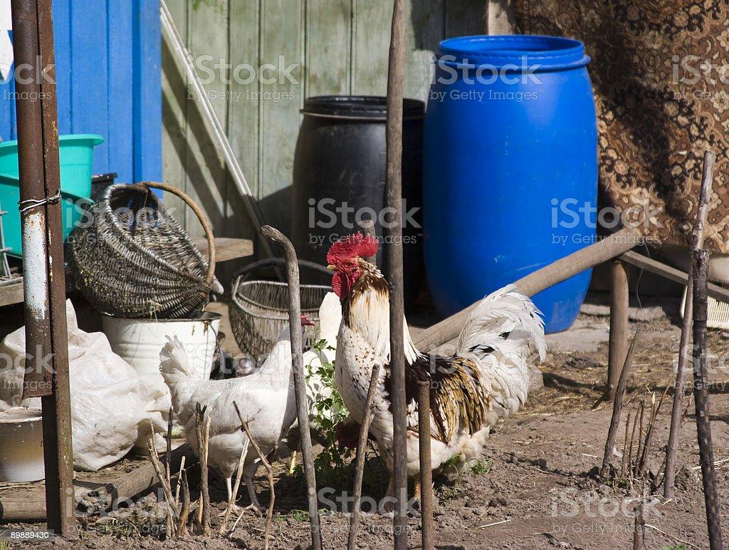 the farm royalty-free stock photo