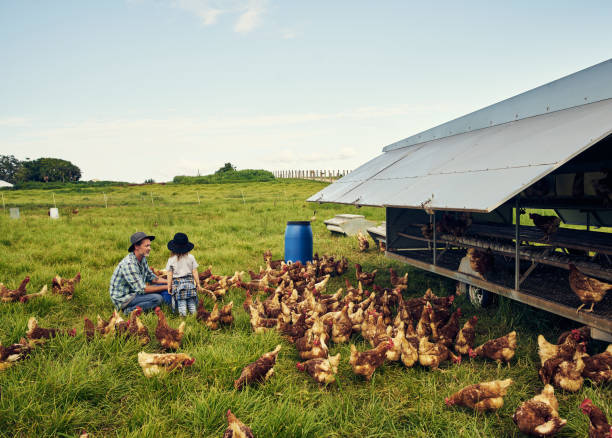 the farm will be yours when you grow up - organic farm stock photos and pictures