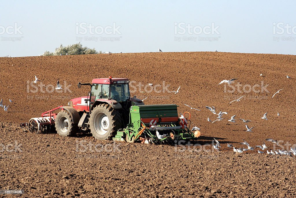 The farmer and the sea gulls royalty-free stock photo